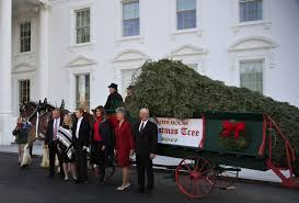 melania trump receives the official white house christmas tree