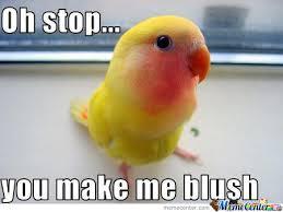 Meme Bird - you make me blush funny bird meme