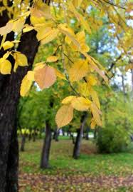 Why Fall Is The Best Season 5 Reasons Why Fall Is The Best Time For Reflection And Self