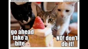 Cute Kitty Memes - must watch cute kitten and cat meme slideshow youtube