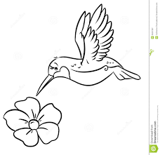hummingbird flower coloring pages