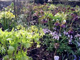 Small Garden Plants Ideas How To Design And Plant A Woodland Garden Saga