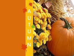 fall pumpkin wallpapers pumpkin wallpaper gullu