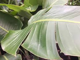 native plant nurseries melbourne online plant nursery melbourne victoria littlest plant shop