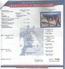 sale horses townsend u0027s training farm inc 536 4th range rd