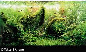 Aquascape Takashi Amano A Path To The Finished Aquarium By Takashi Amano