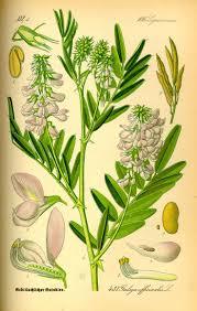 escape of the invasives top six invasive plant species in the 7 best ontario invasive species images on pinterest ontario