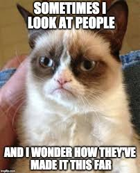 Image 9 Best Grumpy Cat - 9 best grumpy cat memes grumpy cat humor grumpy cat quotes and