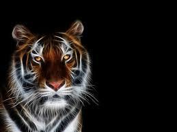 imagenes abstractas hd de animales fondos de pantalla hd los mejores compruebalo tu mismo tigers