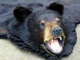 Taxidermy Bear Rug Taxidermy Bear For Sale The Best Bear 2017