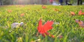 Landscaping Lawn Care by Bardos Landscaping U0026 Lawn Care In Maineville Oh Nearsay