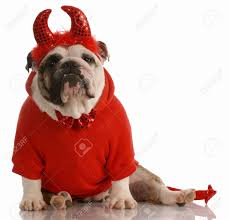 Halloween Costumes English Bulldogs Costume Bulldog Stock Photos Royalty Free Costume Bulldog Images