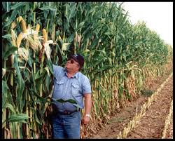 irrigated corn irrigation increases carbon in agricultural soils