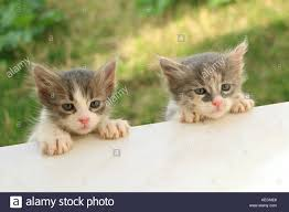 stray kittens stock photos u0026 stray kittens stock images alamy