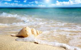 beach shells wallpaper 6929046