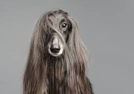 afghan hound utah pdn faces portrait photography competition 2012 winners u0027 gallery