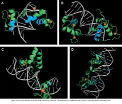 Introduction Introduction To Protein Dna Interactions Structure