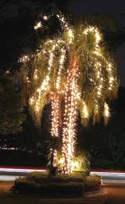Christmas Outdoor Decorations Florida by 104 Best A Florida Christmas Images On Pinterest Coastal
