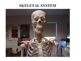 Anatomy And Physiology Skeletal System Test Skeletal System Ppt Video Online Download