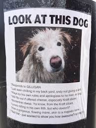 Lost Dog Meme - this hilarious lost dog poster i found a couple years ago meme guy