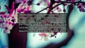 homaro cantu quote the significance of the cherry blossom tree
