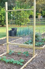 Can Cucumbers Grow Up A Trellis Growing Cukes In Cages Anyone Do It This Way