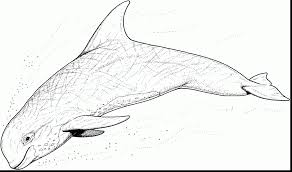 beautiful coloring pages of beluga whales with whale coloring