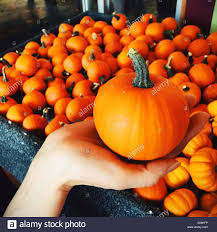small pumpkins holding a small pumpkin a bin of small pumpkins