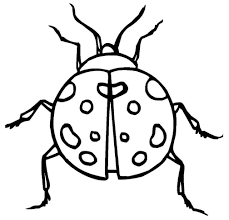 ladybug coloring pages for kids coloring me