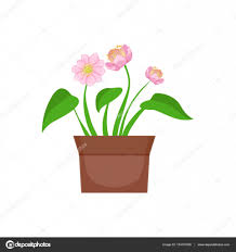 home pink flower with heart shape leaves in the flowerpot flower
