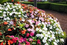 Flower Shrubs For Shaded Areas - annuals for part to full shade beyond impatiens and petunias u