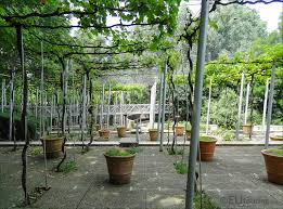 hd photos of jardin de la treille vineyard inside parc de la villette