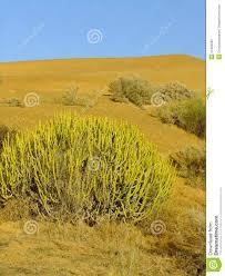 thar desert location thar desert near jaisalmer rajasthan india stock image image