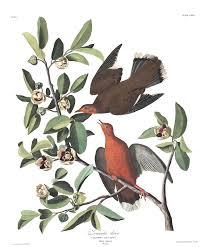 listbirds blog u2014 the birding project
