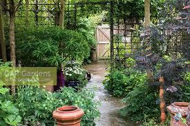 Garden With Trellis Gap Gardens A Small Town Garden With Metal Trellis Dividing The