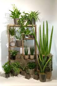 plantes d駱olluantes chambre tendance les plantes dépolluantes avec stéphane plaza fleuriste