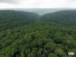 Arkansas Forest images Nw arkansas hunting property next to the ozark national forest jpg