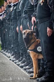 belgian malinois in movies police dog dies in raid that killed paris attacks mastermind ny