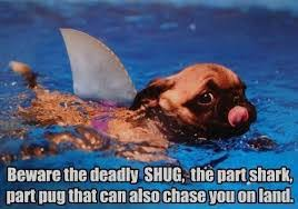 Funny Shark Memes - funny pet memes archives page 5 of 12 what breed is it