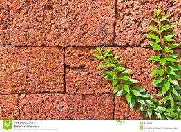 close up climbing plants stock photo image 46419591