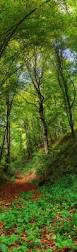 Forest Green by 493 Best Wood And Garden Images On Pinterest Nature Beautiful