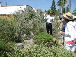 native plant 15th annual california native plant garden tour buena vista audubon