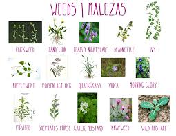 Different Types Of Gardens Weeds Jungle Taming With Bill Kunze