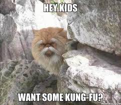 Fu Memes - kung fu master cute pinterest kung fu memes and animal