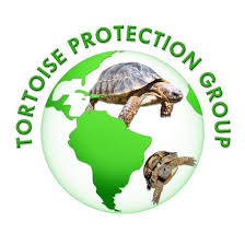 buying u0026 setting up for a baby tortoise tortoise protection group