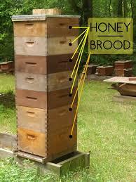 How To Make A Top Bar Beehive So You Want To Keep Bees U2014 The Carolina Bee Company