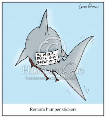 cartoon remora bumper stickers