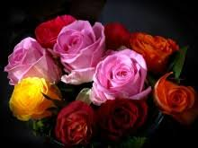 different color roses colors of roses what do they