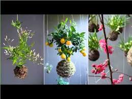 How To Decorate A Pot At Home House Plant Indoor Hanging S Picture Set Of House Office Or