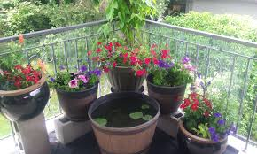 potted flowers how to plant outdoor potted flowers nuggets of gold